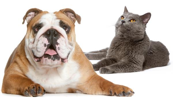 glicemia veterinara