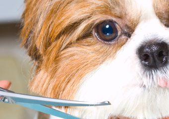 Cosmetica veterinara